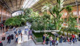 Kitelepítették a teknősöket a madridi Atocha pályaudvarról